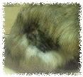 たぬちゃんの毛b