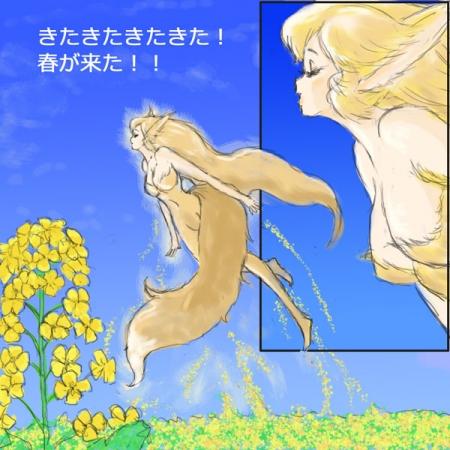 菜の花狐歓喜の春