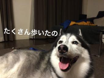 IMG_2186_Fotor.jpg