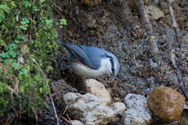湯川の野鳥