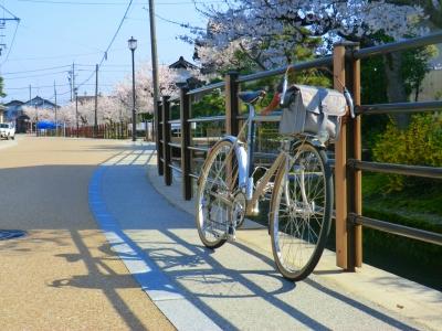 瑞龍寺の参道の桜