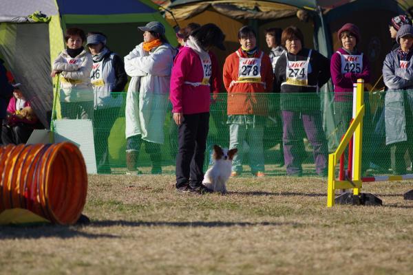 12/23/2014 神奈川北アジ競技会