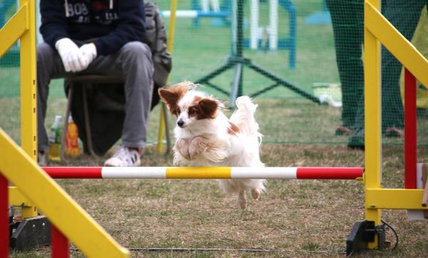 神奈川ブロック・アジ競技会 3/14/2015