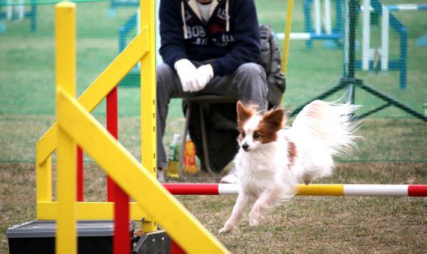 AG 神奈川ブロック・アジ競技会 3/14/2015