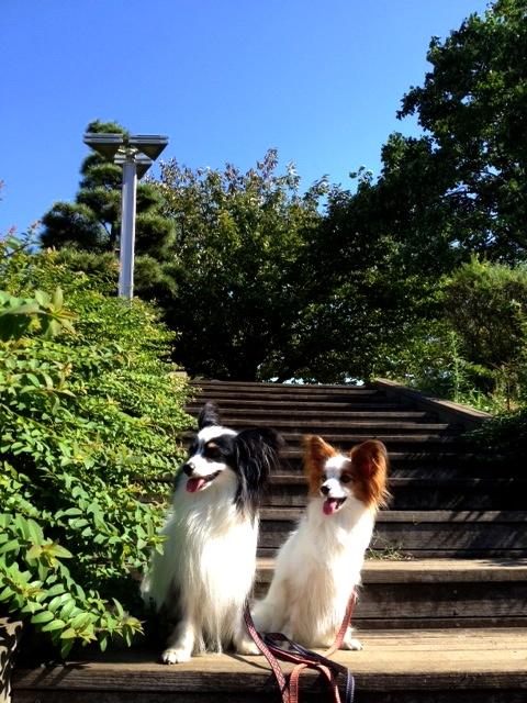 散歩 東品川海浜公園