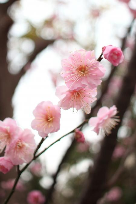 桃の節句 2015