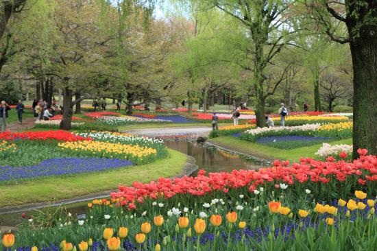 昭和記念公園 チューリップ 2015