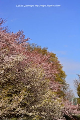 2015年 春 / 神田川