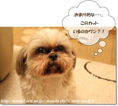 看板犬:ちぃさん
