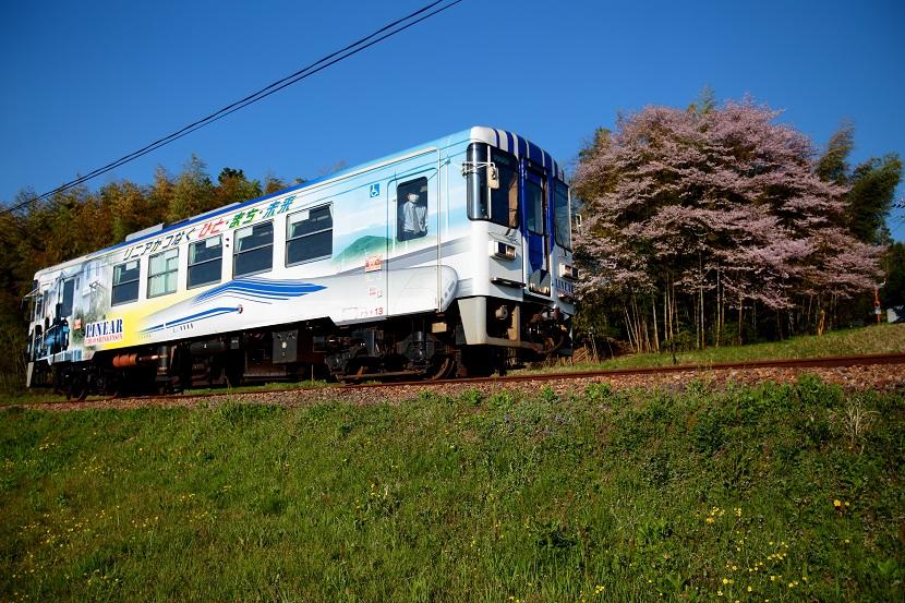 おもしろい桜・・不思議な桜・・・