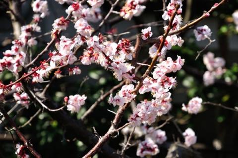 梅の郷 月ヶ瀬温泉 ふれあい市場手作りかきもち