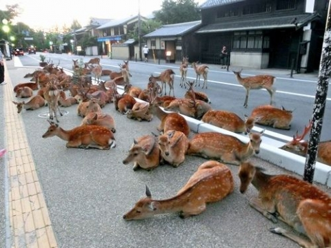 奈良県宿泊者限定2億5千万円キャッシュバックキャンペーン (1)