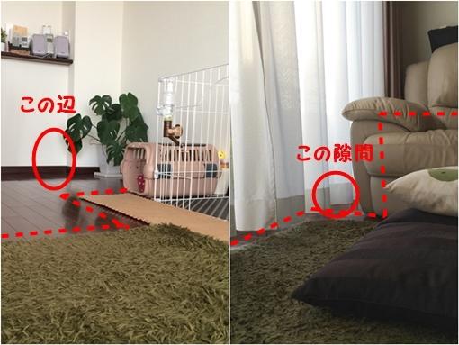 cats3_20150127180201a6a.jpg