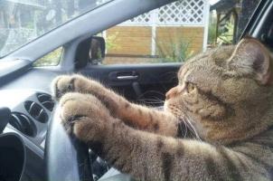 猫ドライブ