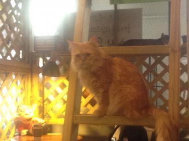 猫は2階席がお好き?
