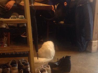 やはり現金な猫たち(笑)餌をあげるお客さんのところには真っ先に行きます笑