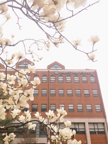 延世大学もいよいよ春が始まる。