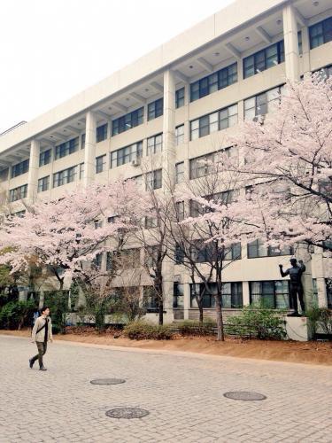 弘大キャンパス内も桜が…
