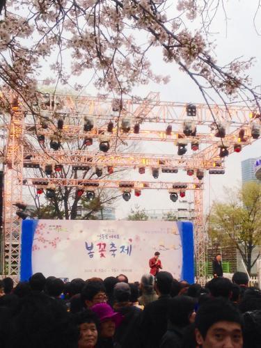 汝矣島で桜のお祭り!2015