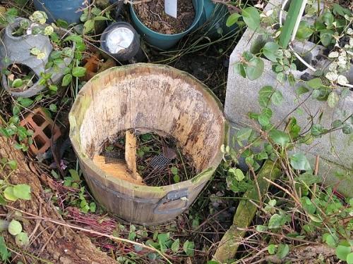 春の寄せ植え_木製プランター1