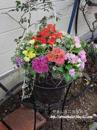 庭の花達4_ジュリアンドーム