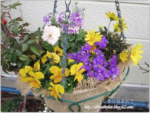庭の花達5_グリーンアイスハンギング