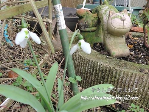 庭の花達10_スノードロップ