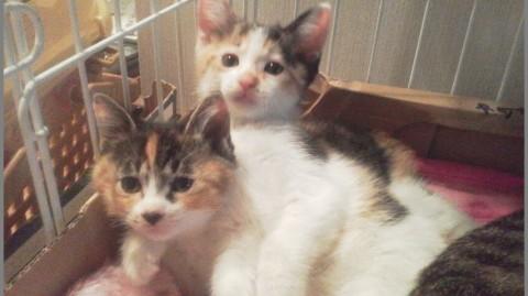 cat_52230_2kata.jpg