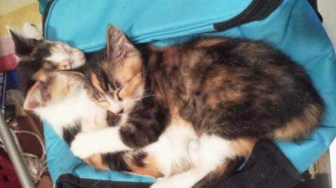 cat_52353_2kata.jpg