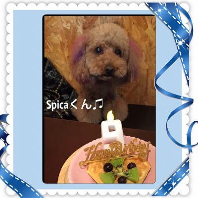 スピカくん/BirthdayBoy♪♪