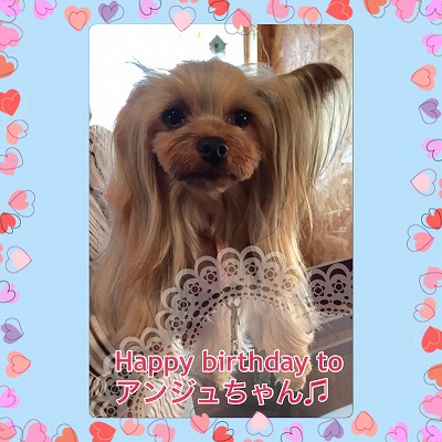 アンジュちゃん/BirthdayGirlちゃん♪♪