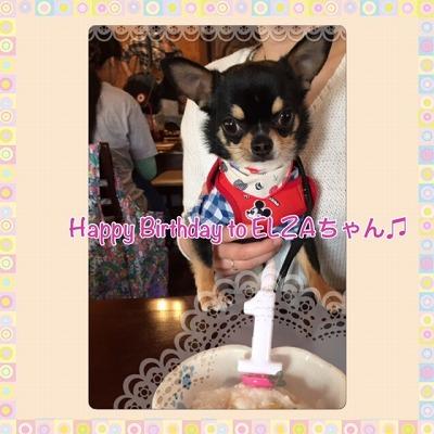 エルザちゃん/Birthday Girl♪♪