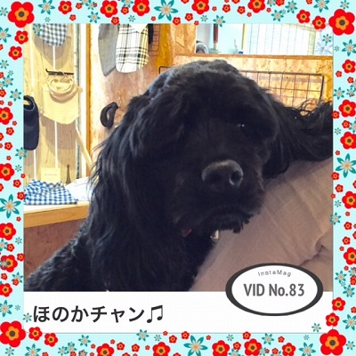 ほのかチャン/VID83