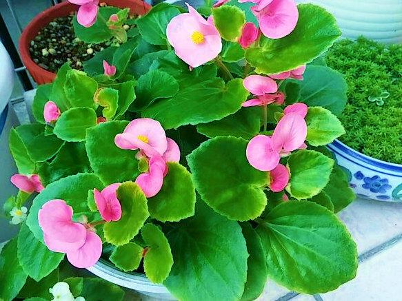庭の花⑥-1