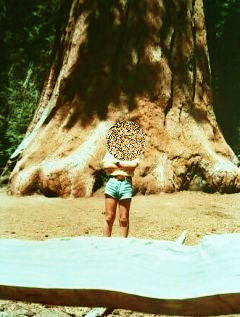 ヨセミテ国立公園②-1セコイヤの大木