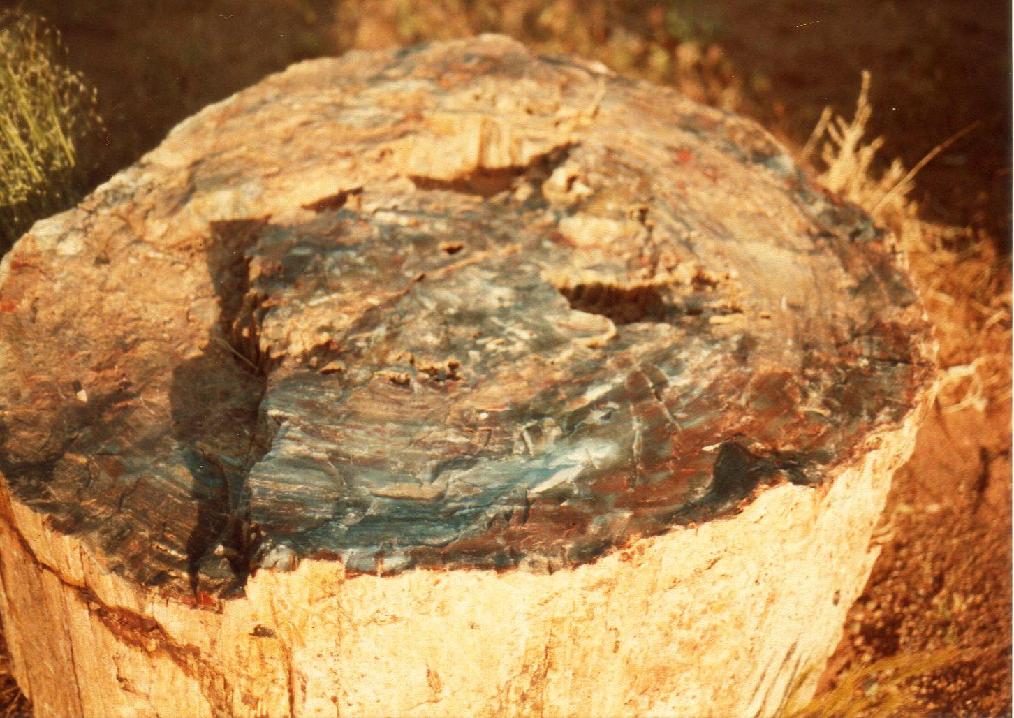 化石の森③