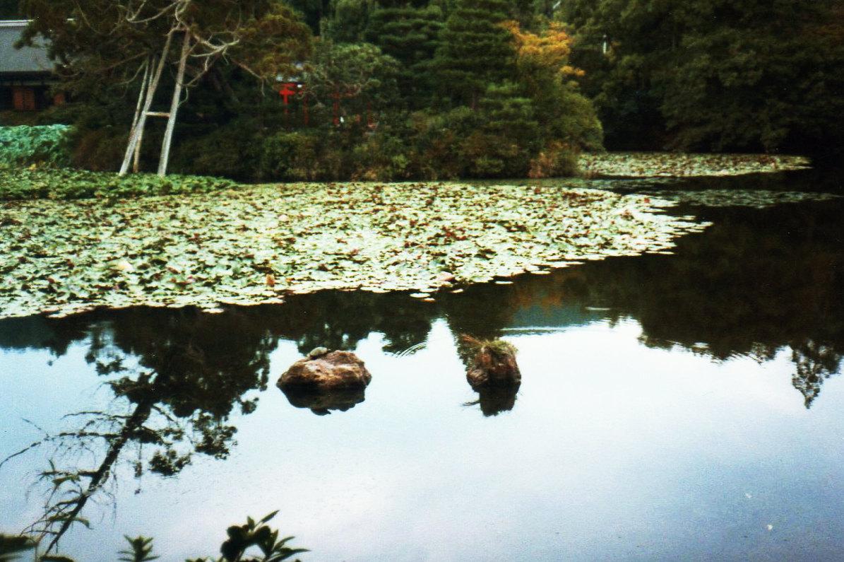 京都竜安寺・石庭(鏡容池)③ー1
