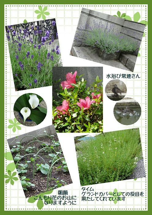 庭の花 6月中旬