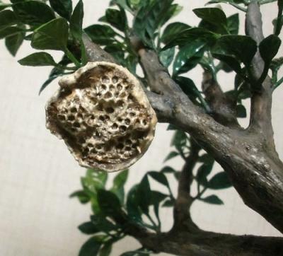 ハチの巣用