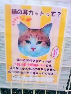 ネコの耳カット