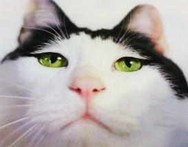 anan猫
