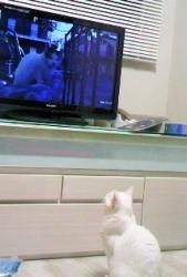 TVをみるちーちゃん②