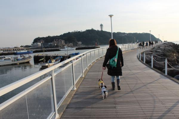 鵠沼散歩3