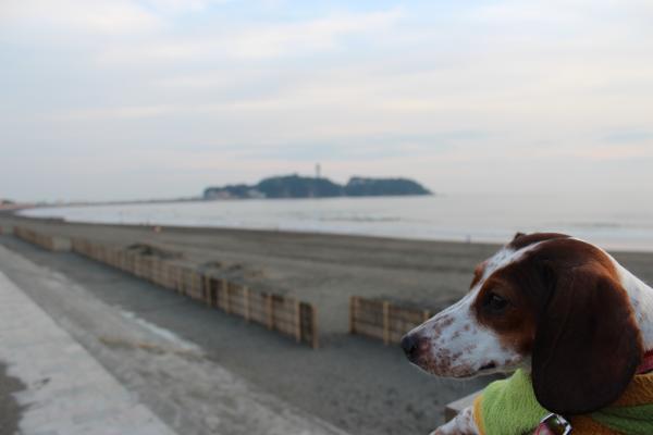 鵠沼散歩11