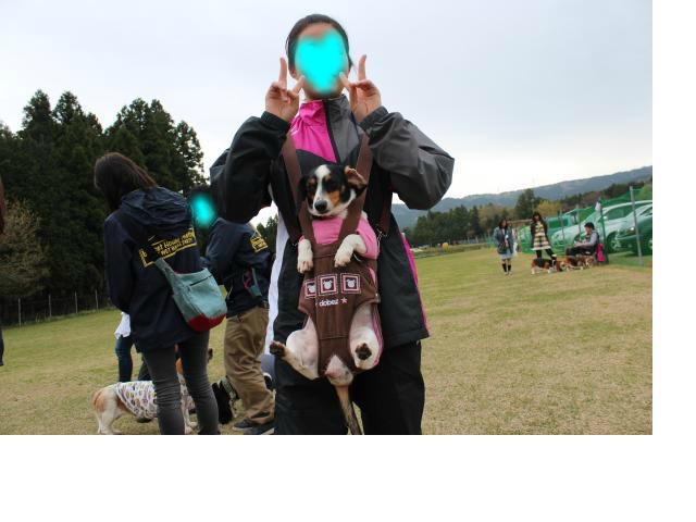 snap_alicenosippo_201546191012.jpg
