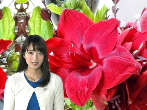小野彩香 アマリリス