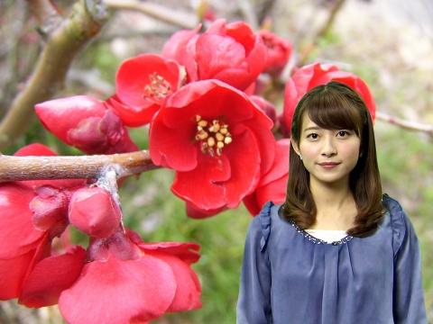 山本 里奈 ボケの花