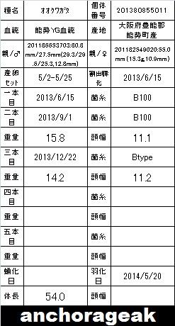 6A 201380855011 Card