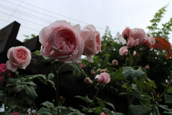 IMG_9380.jpg