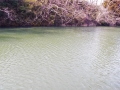 暖かそうな沼